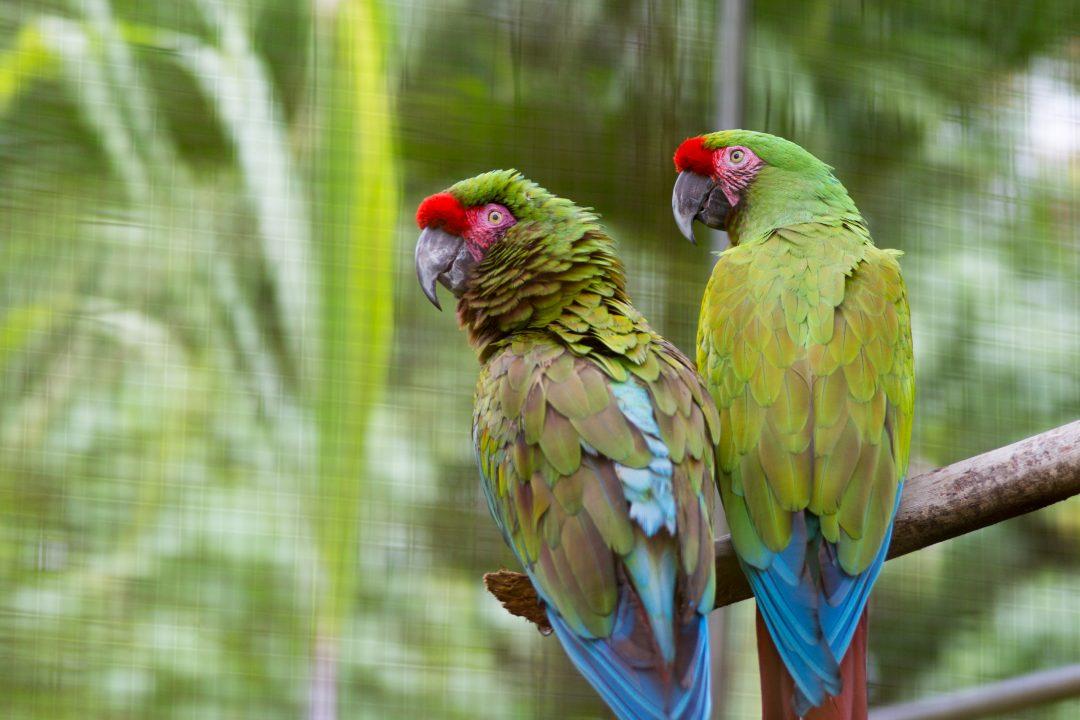 Hilo Zoo